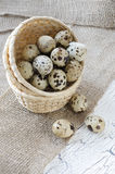 Quail eggs. In the basket Royalty Free Stock Photography