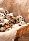 Quail eggs in basket Stock Photo