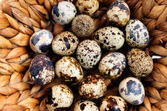 Quail eggs in basket, close-up. Quail eggs in wicker basket, close-up Royalty Free Stock Photo