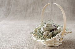 Quail eggs in the basket, copy-space Stock Photography
