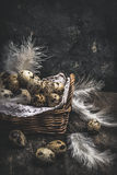 Quail eggs in Basket on dark wooden. Background Royalty Free Stock Images