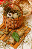 Quail eggs in basket. Diet food. Royalty Free Stock Photos