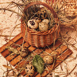 Quail eggs in basket. Easter. Stock Photos