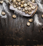 Quail  eggs in basket  with feathers on rustic wooden background, top view Royalty Free Stock Images