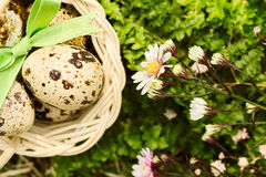 Quail eggs in a basket Royalty Free Stock Images