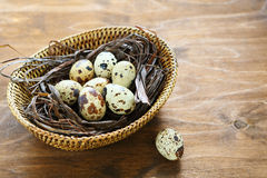 Quail eggs in a basket Stock Images