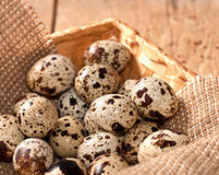 Quail eggs in basket. Fresh Quail eggs in the basket on table Stock Photography