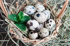 Quail eggs in a basket with the hay Stock Photography