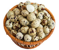 Quail eggs in a basket. A lot of. Isolated on white background Royalty Free Stock Photography