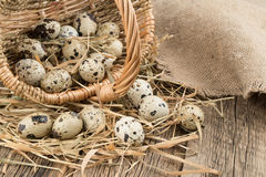 Quail eggs in a basket on old wooden table. Selective focus Royalty Free Stock Photos