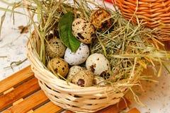 Quail eggs in basket. Protein. Stock Photos