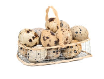 Quail eggs in basket. Raw quail eggs in an iron basket on a white background Stock Images