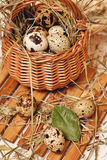 Quail eggs are in basket. Weight loss. Stock Image