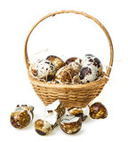 Quail eggs in a basket Royalty Free Stock Photos