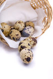 Quail eggs in a basket on a white Stock Photography