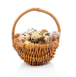 Quail eggs in basket. On white background Stock Images