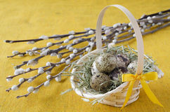 Quail eggs in the basket with willow branch, close up Stock Photo
