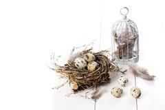 Quail eggs with birdcage Stock Photos