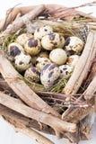 Quail eggs of birds nest. Easter composition. Stock Photo