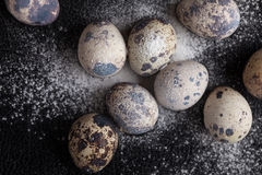 Quail eggs on black background in the flour Royalty Free Stock Photo