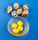 Quail eggs on blue Stock Photo