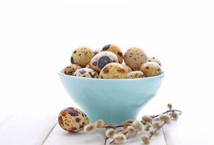 Quail eggs in blue plate Royalty Free Stock Image