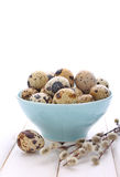 Quail eggs in blue plate Royalty Free Stock Images