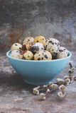 Quail eggs in blue plate Stock Photography