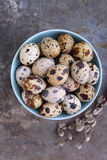 Quail eggs in blue plate Stock Image