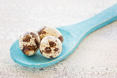 Quail eggs on a blue wooden spoon, macro Royalty Free Stock Images