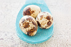 Quail eggs on a blue wooden spoon, macro Stock Images