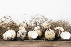 Quail eggs border background. Stock Images