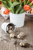 Quail eggs and bouquet of red tulips Royalty Free Stock Photos