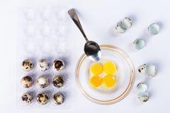 Quail eggs, bowl, broken eggs. Quail egg  raw   broken  food  bowl  healthy  diet  nature  fresh  yolk  yellow  ingredient shell brown  organic  breakfast Stock Images