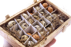 Quail eggs in box Stock Photography