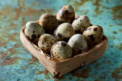 Quail eggs in a box on a blue textured background, top view, selective focus. Spotted quail eggs arranged in rows in a box on a blue textured background, top Stock Images