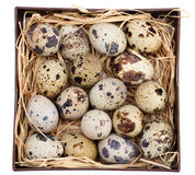 Quail eggs in a box Royalty Free Stock Image