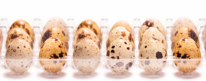 Quail eggs in a box Royalty Free Stock Images