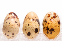 Quail eggs in a box Stock Images