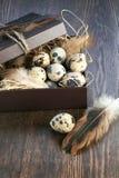 Quail eggs in a box Stock Photos