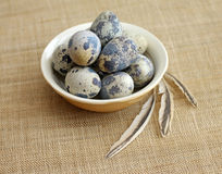 Quail eggs in brown bowl with feathers Stock Photos