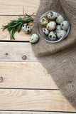 Quail eggs, a bunch of rosemary and burlap Stock Image