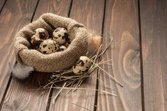 Quail eggs in burlap sack on old wooden background Royalty Free Stock Images