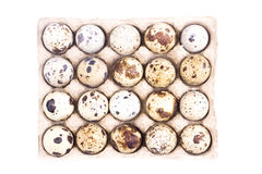 Quail eggs in cardboard tray Stock Image