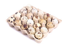 Quail eggs in cardboard tray Royalty Free Stock Photos