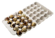Quail eggs in carton box Royalty Free Stock Images