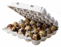 Quail eggs in carton box. Isolated on white background Stock Image