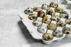 Quail eggs in the cassette stock images
