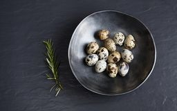 Quail eggs in ceramic black bowl on black ceramic background and. Quail  eggs in ceramic black bowl on ceramic background and green rosemary, may be used as Royalty Free Stock Photography