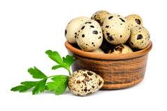 Quail eggs in a ceramic bowl. Stock Image